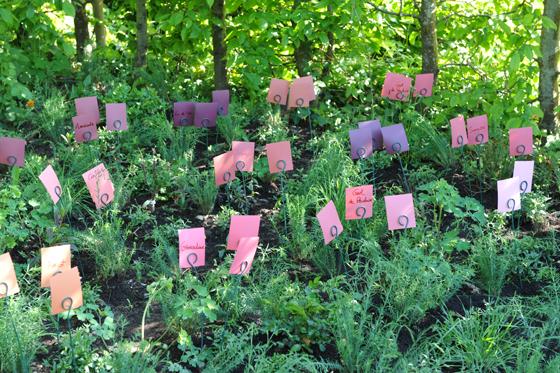Festival des jardins Chaumont/Loire-Gamme florale